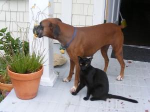 Milu and her puppy Raisin